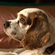 Sergio's dog, Charlie