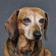 Chynna's dog, Dogmeat