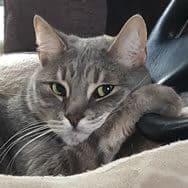 Trevor's Cat, Gustav