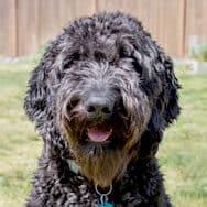 Tammy's dog, Koko