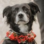 Kari's dog, Melly
