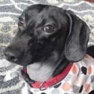 Dimitri's dog, Tunde
